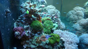 fish tank service companies loudoun fairfax washington dc