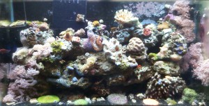 reef aquarium maintenance fairfax loudoun prince william