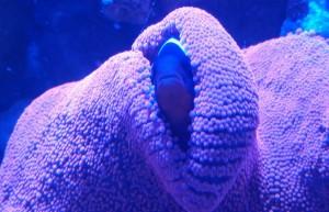 reef aquarium store northern va virginia fairfax manassas