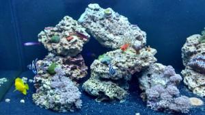 saltwater aquarium service northern va virginia