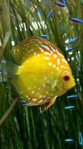 discus store aquarium fish northern va virginia