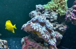custom aquariums potomac md mclean great falls