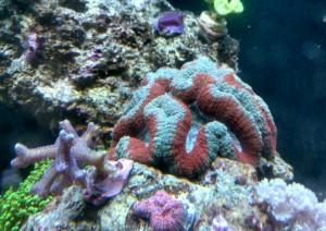 custom aquariums northern va virginia fairfax
