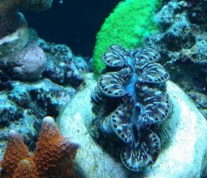 aquarium maintenance middleburg catharpin gainesville manassas