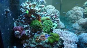fish tank service companies loudoun fairfax washington dc