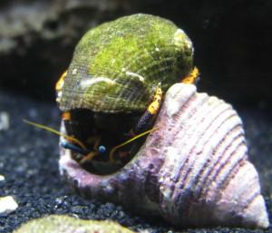 freshwater aquarium stores northern va virginia fairfax centreville