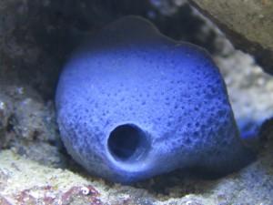 freshwater aquarium maintenance cleaning northern va virginia