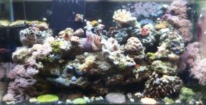 reef aquarium maintenance fairfax loudoun prince william